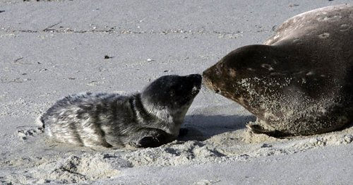 Seal-Mommy-and-Baby.jpg